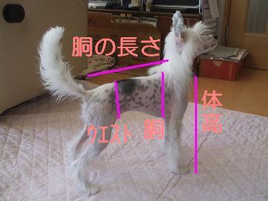 f0179203_1624833.jpg
