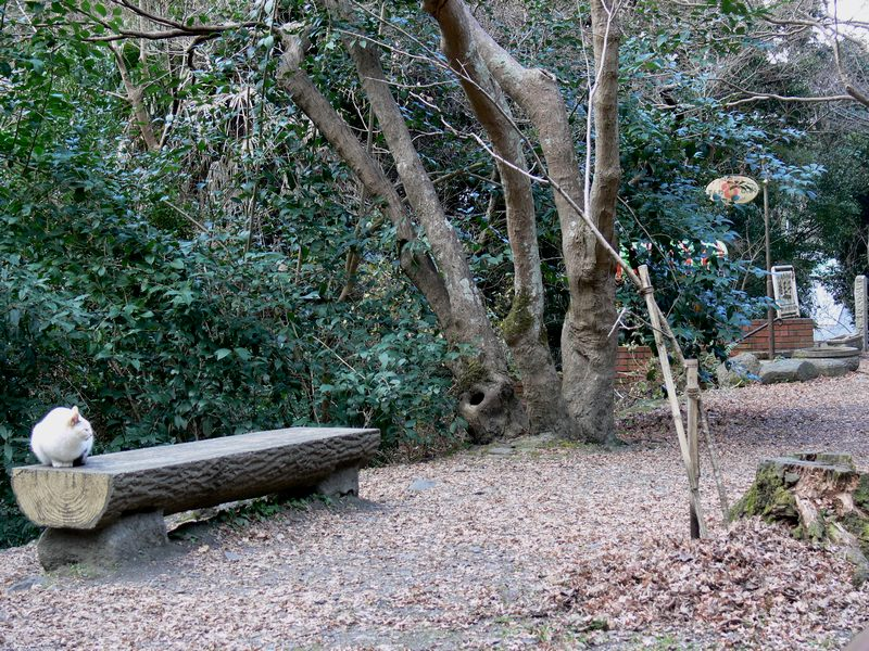 「京都・冬の旅・哲学の道~南禅寺へ」_d0133024_14172496.jpg