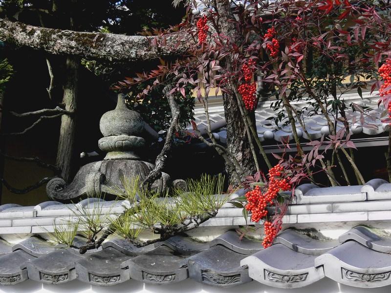 「京都・冬の旅・哲学の道~南禅寺へ」_d0133024_14201447.jpg