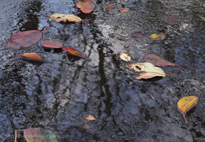 路面の森 /  Trees on the asphalt_f0193425_012919.jpg