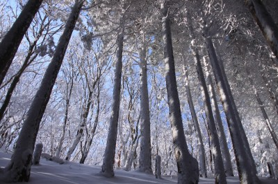 霧氷の三峰山 1235m 奈良県_d0055236_21273759.jpg