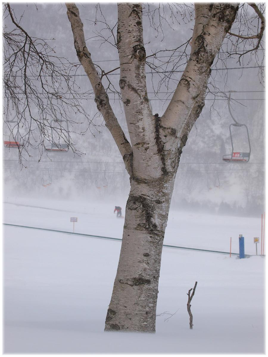 ハチ高原スキー場 6_f0021869_23113170.jpg