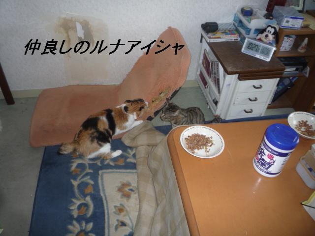 b0112380_20101218.jpg