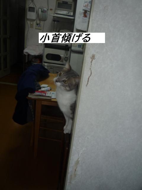 b0112380_20111027.jpg
