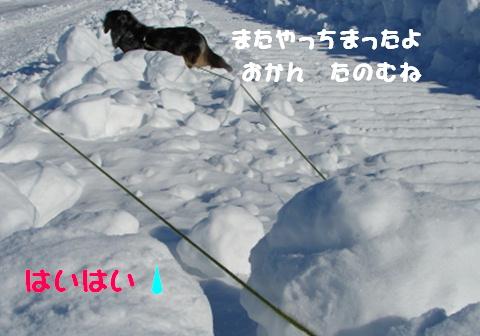障害物散歩_f0195891_20313072.jpg
