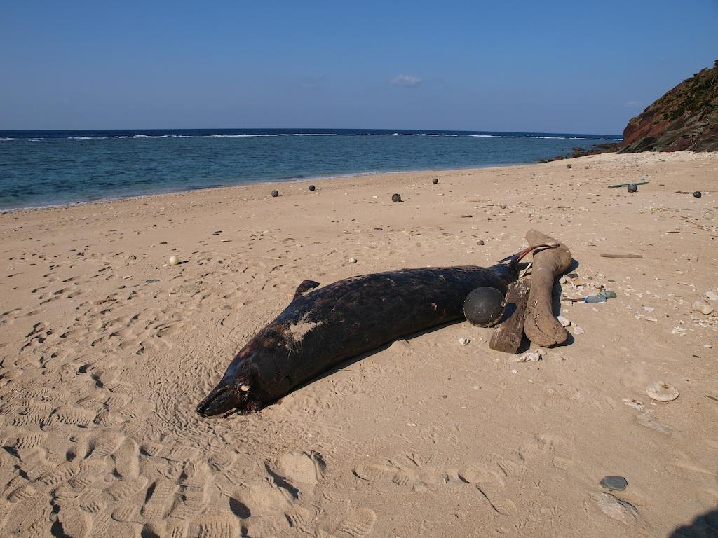 1/16 漂着クジラ調査_a0010095_0223972.jpg