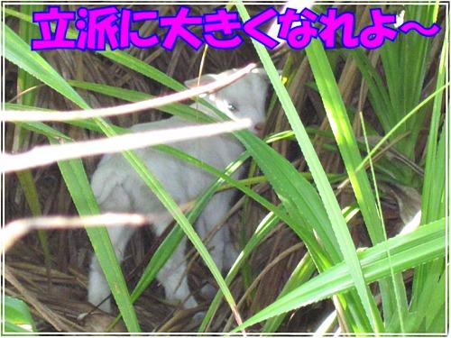 b0089616_18594415.jpg