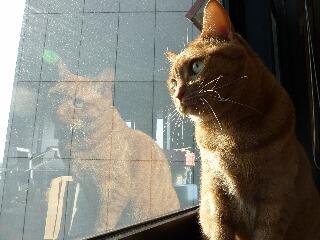 きらきら猫 しぇる編。_a0143140_20202231.jpg