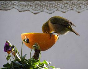 MON  18  JANUARY 2010_a0099744_11152230.jpg