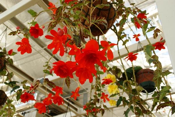 神代植物園3_f0138447_14163922.jpg
