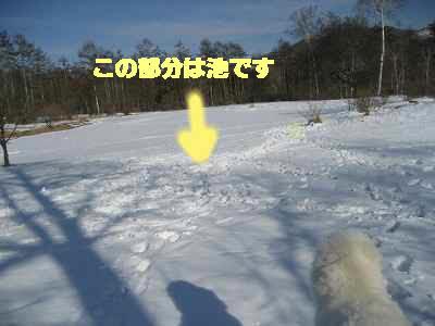 d0033151_20112617.jpg