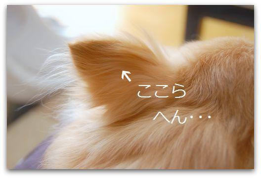 b0112758_1610477.jpg