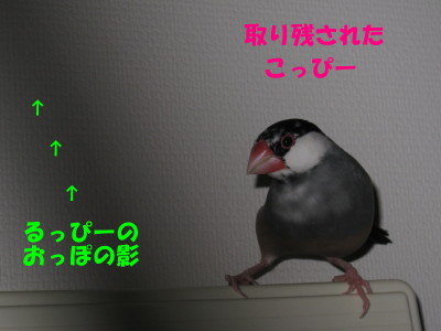 b0158061_2061955.jpg