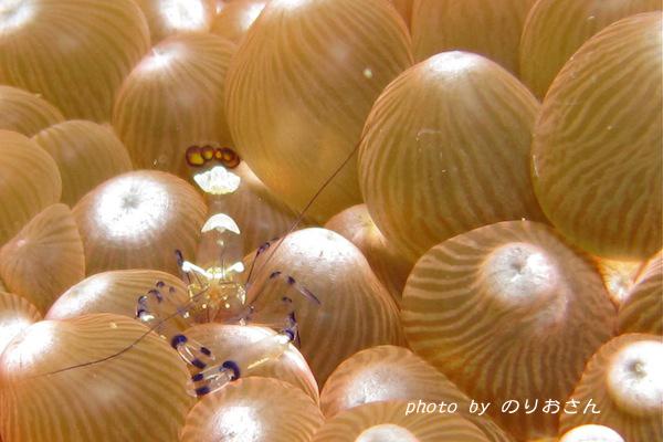 2010.01.17 Sun. みなべ・田辺_e0158261_440286.jpg