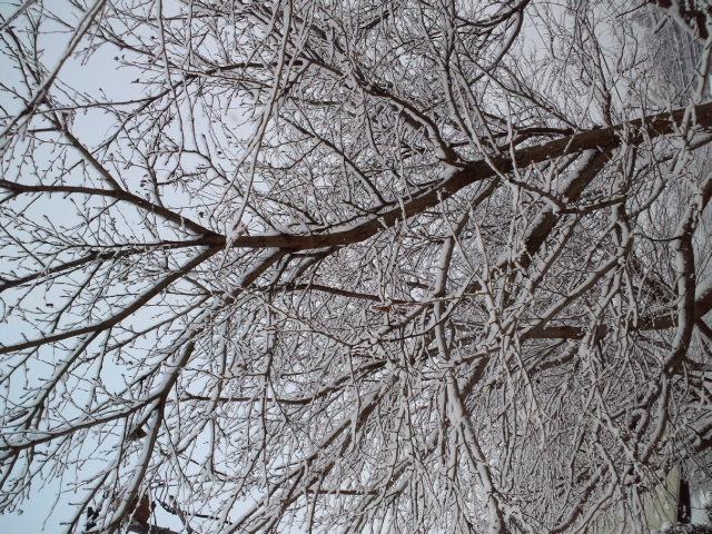雪雪_a0065393_22384732.jpg