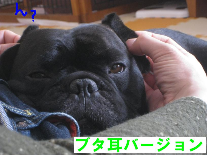 c0113109_245697.jpg