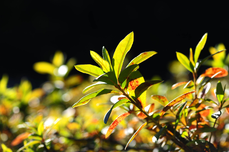 光が当たった葉っぱ_e0157647_20413522.jpg