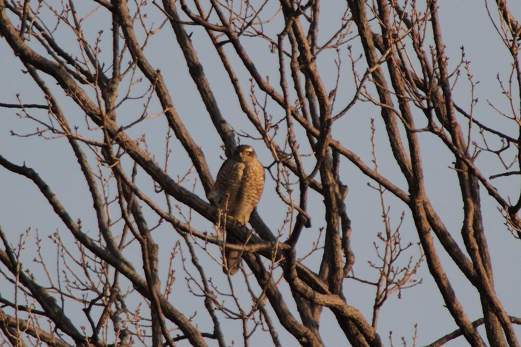野鳥撮り_e0105376_140339.jpg