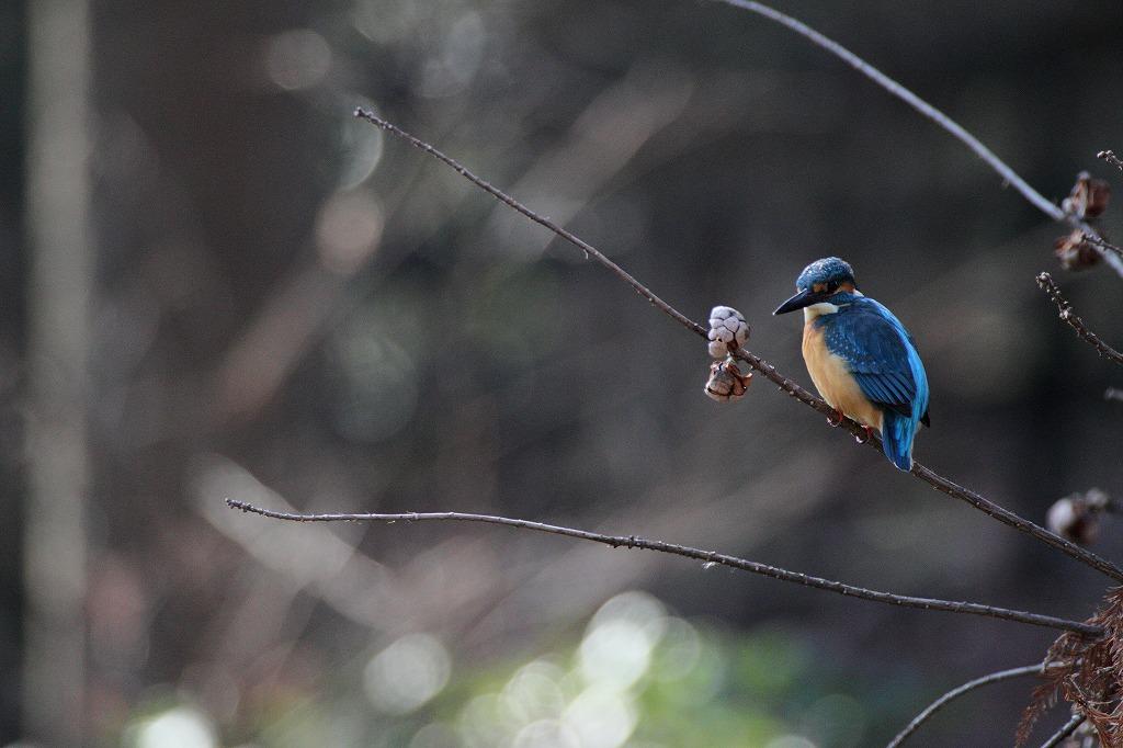 野鳥撮り_e0105376_1415861.jpg
