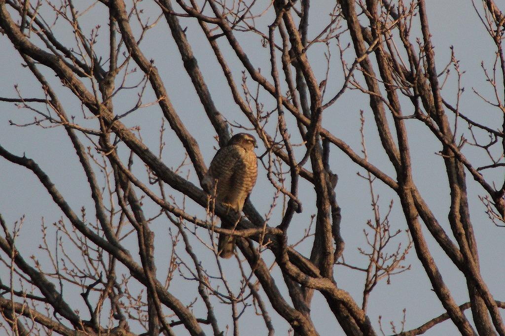 野鳥撮り_e0105376_158148.jpg