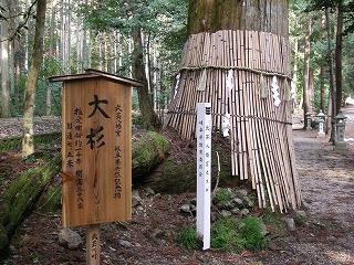 関市の巨木を2本_e0064783_22215834.jpg