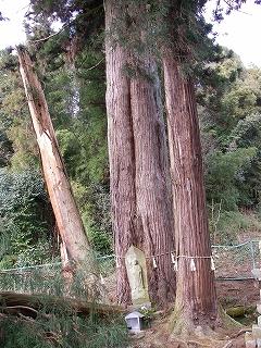関市の巨木を2本_e0064783_2224297.jpg