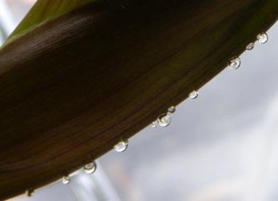 簡易温室の花芽とミニシクラメン_a0136293_17413376.jpg