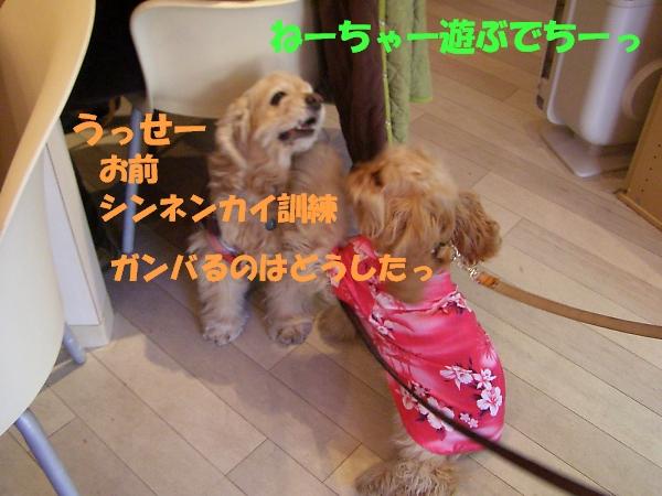b0067012_0112614.jpg