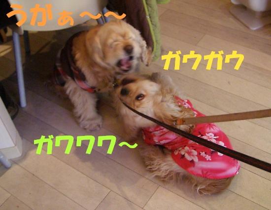 b0067012_0114311.jpg