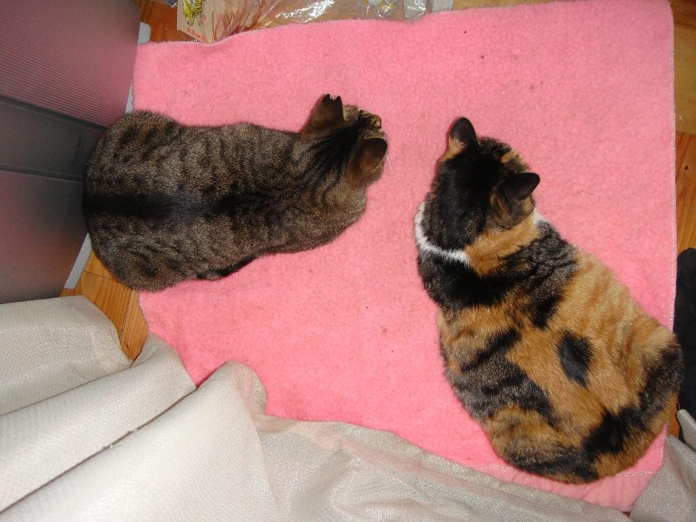 猫_c0111229_18121819.jpg