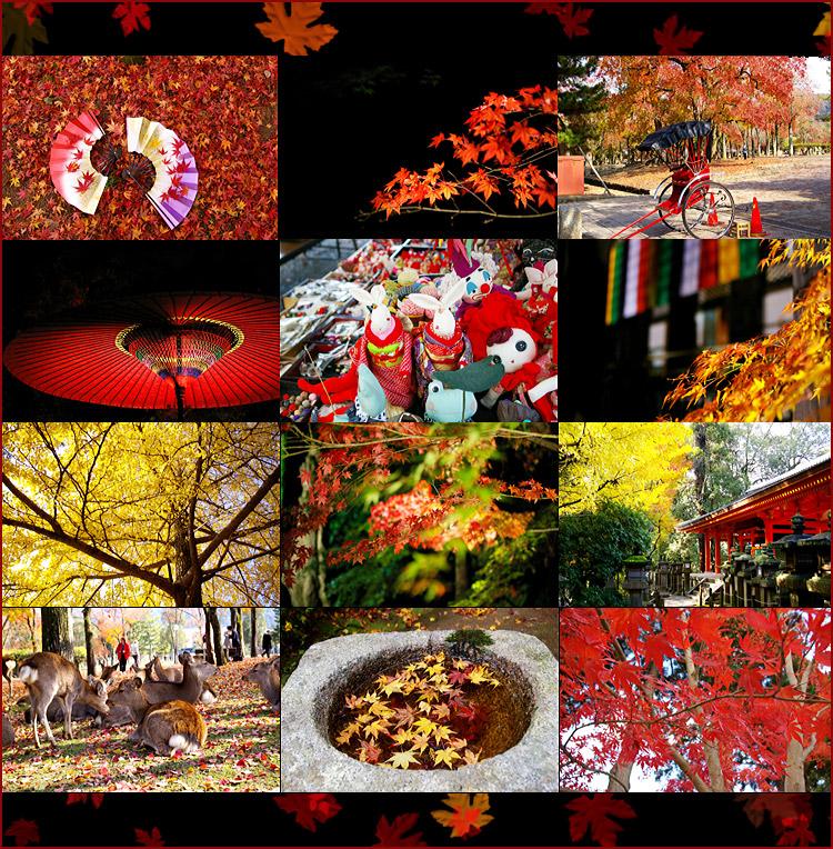 紅葉桌布放送_c0073742_1364612.jpg