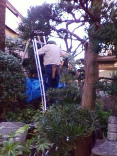 紫仙庵の庭・・・1_f0138653_18194056.jpg