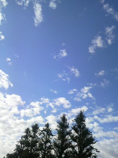 この空とかさ_a0038976_2241310.jpg