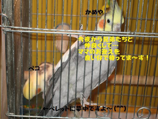 e0027078_2122201.jpg