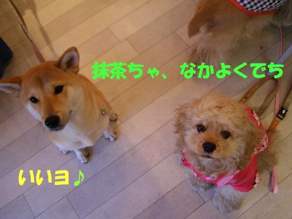 b0067012_13383227.jpg