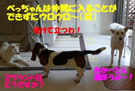 f0121712_18114133.jpg