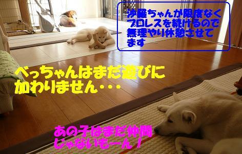 f0121712_1811585.jpg
