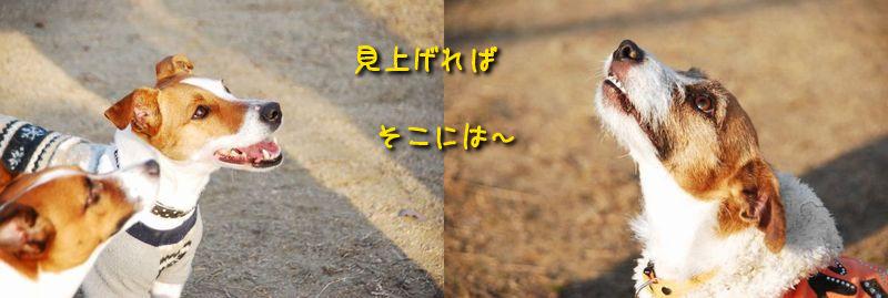 f0203612_0374353.jpg