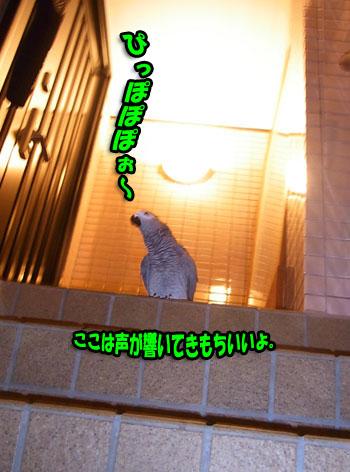 c0133013_16353989.jpg