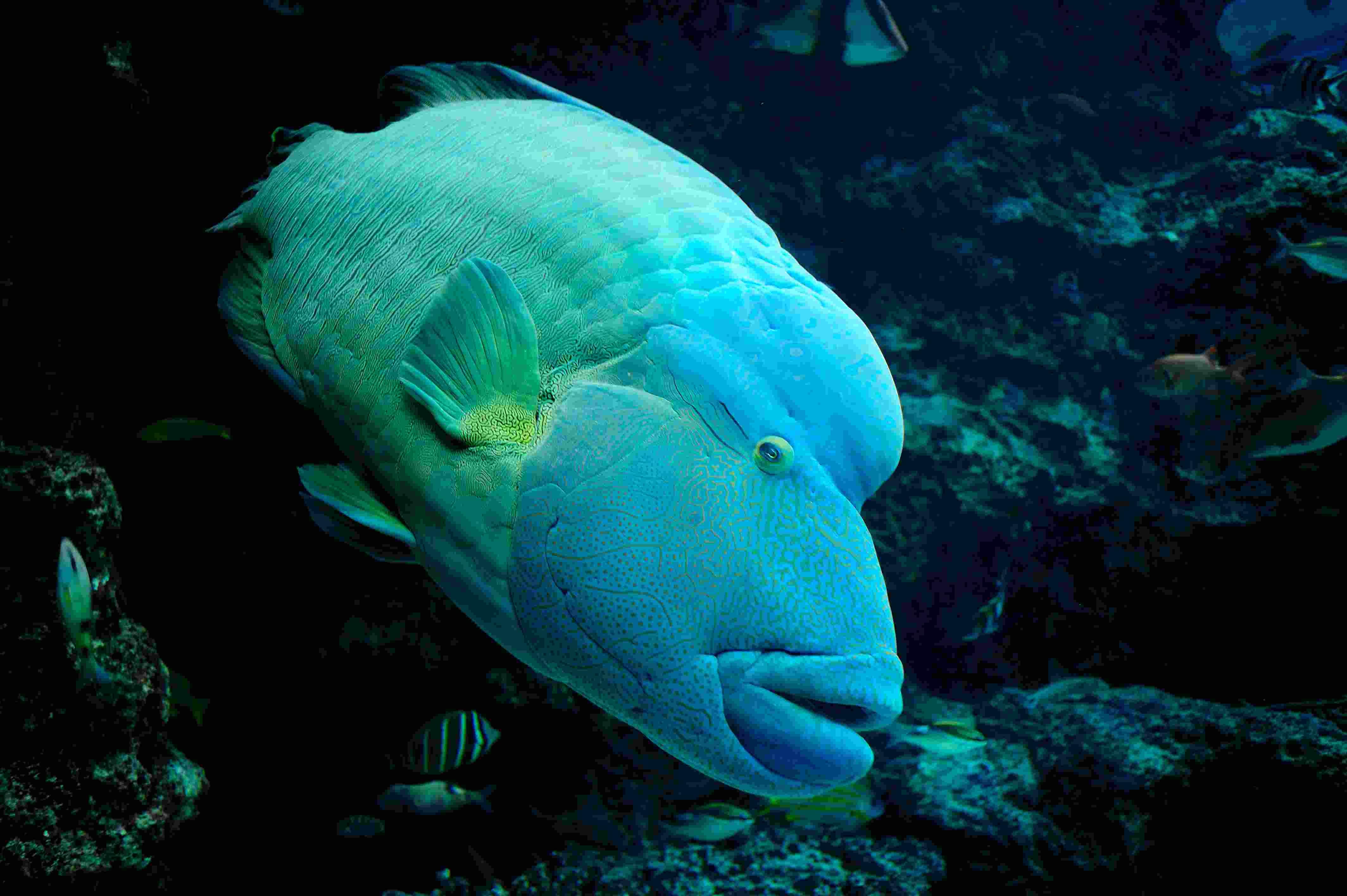 水族館の面白い魚