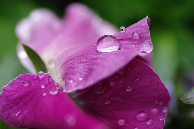 雨の雫をうけて_e0171336_2130332.jpg