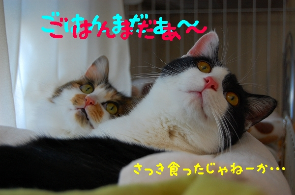 c0181639_0543212.jpg