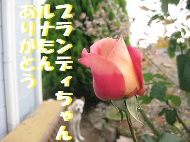 b0151748_12544570.jpg