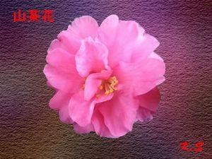 b0133752_22401371.jpg
