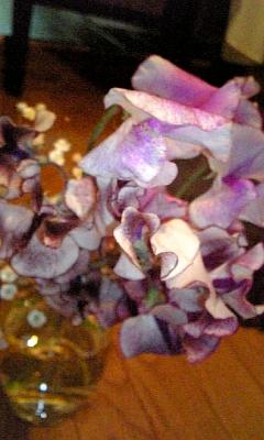 金魚みたいな花びら、春の色_f0008555_18131936.jpg
