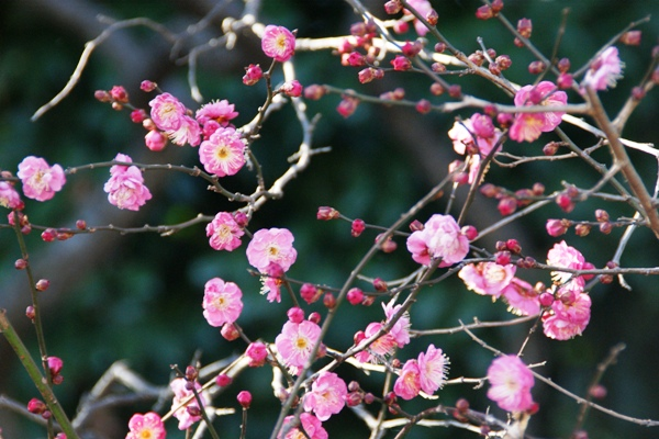 神代植物園5_f0138447_1310225.jpg