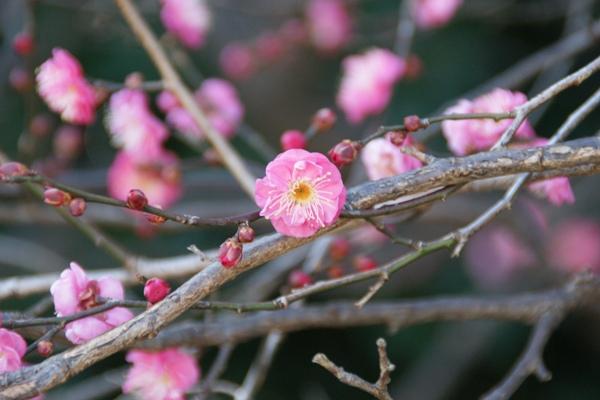神代植物園5_f0138447_13103653.jpg