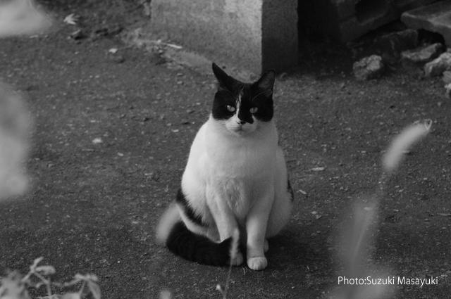 その白黒猫の不安そうな瞳に。。_b0174465_6553265.jpg