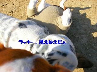 c0214384_1702755.jpg