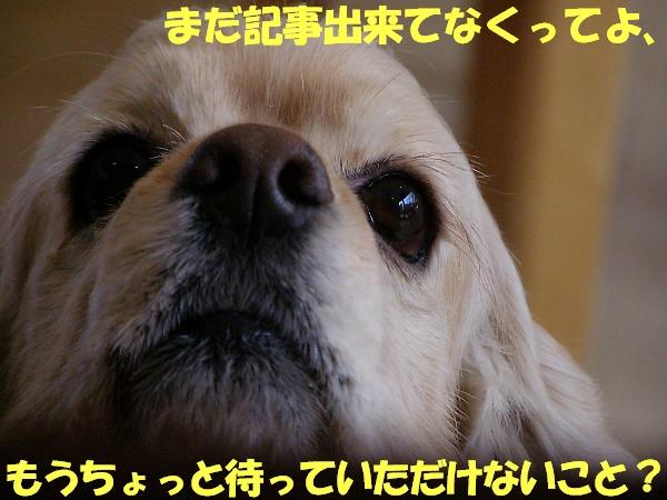 b0067012_1453931.jpg